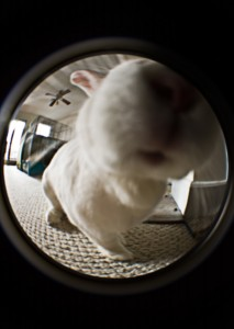 badger-fisheye-hippo