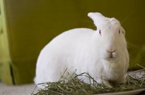 badger hay hay